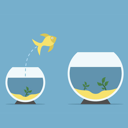 fish jumping from small bowl to big